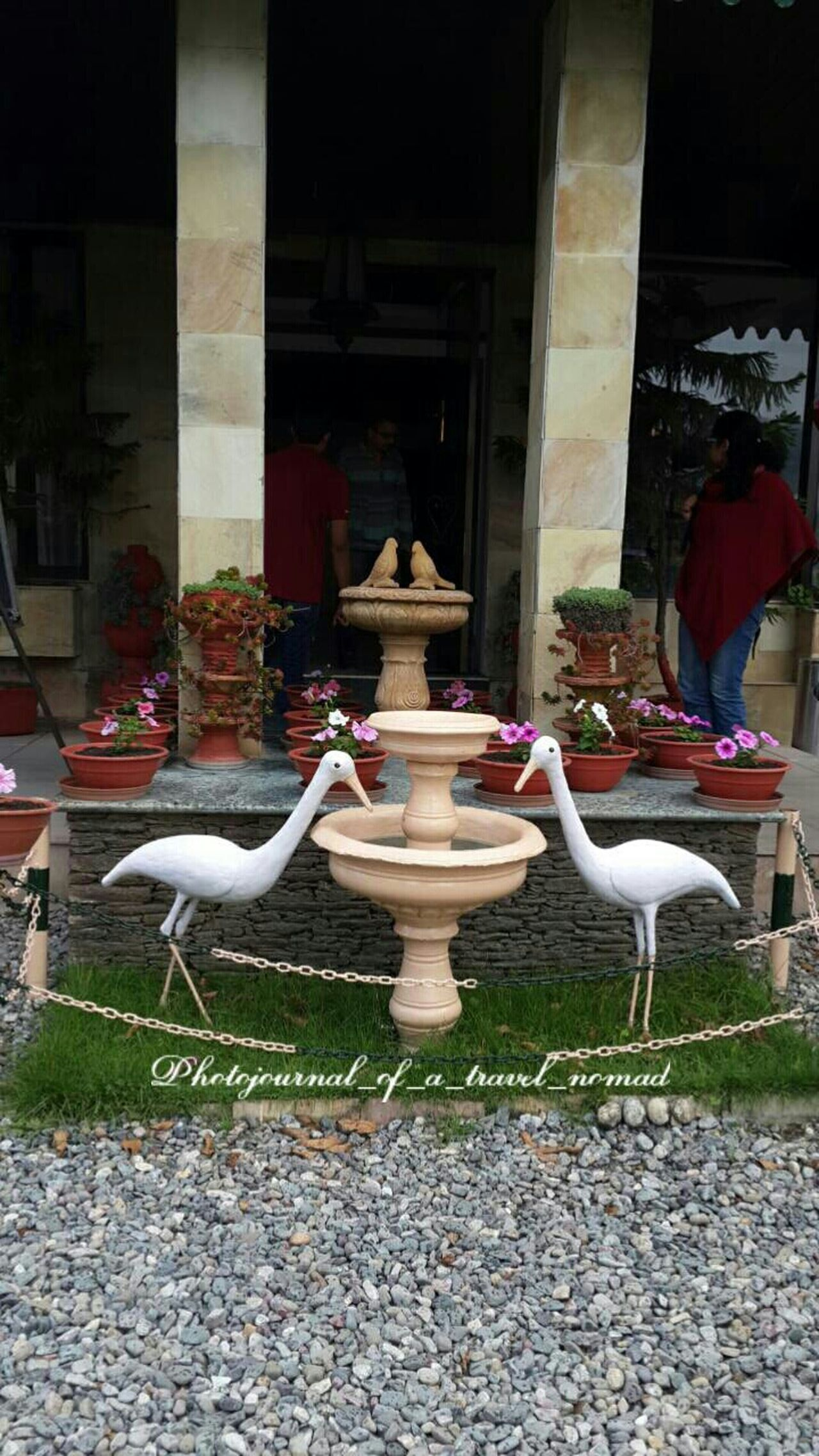A beautiful welcome ... Eyeem Exclusive Itchyfeet Photojournal_of_a_travel_nomad India_gram Travelphotography Shutterbug_travels EyeEmBestPics Eyeem4photography - Indian Attractions India Travel Diaries Hotel's Front Yard