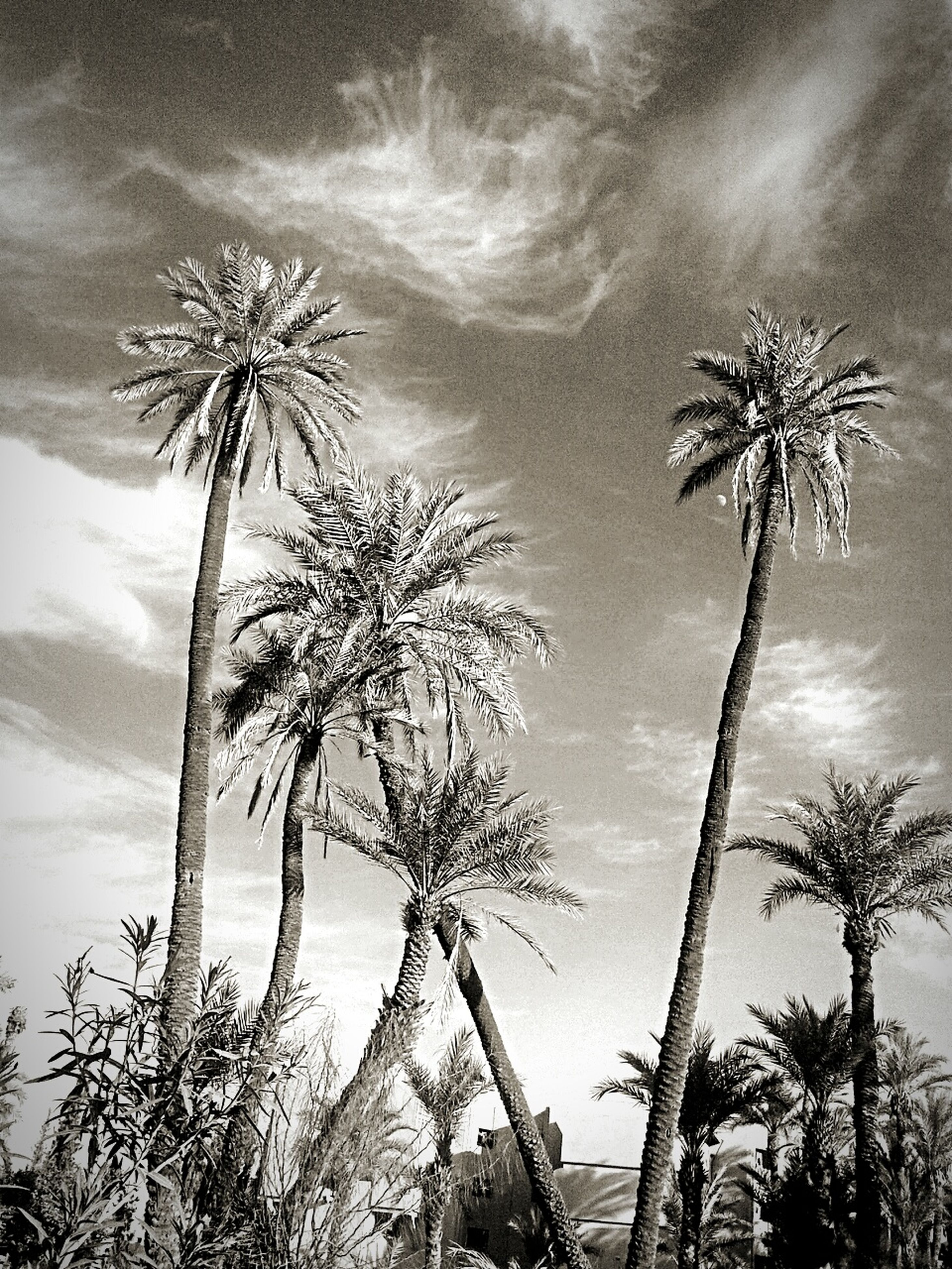 tree, palm tree, sky, low angle view, tree trunk, nature, cloud - sky, beauty in nature, outdoors, no people, scenics, day, growth