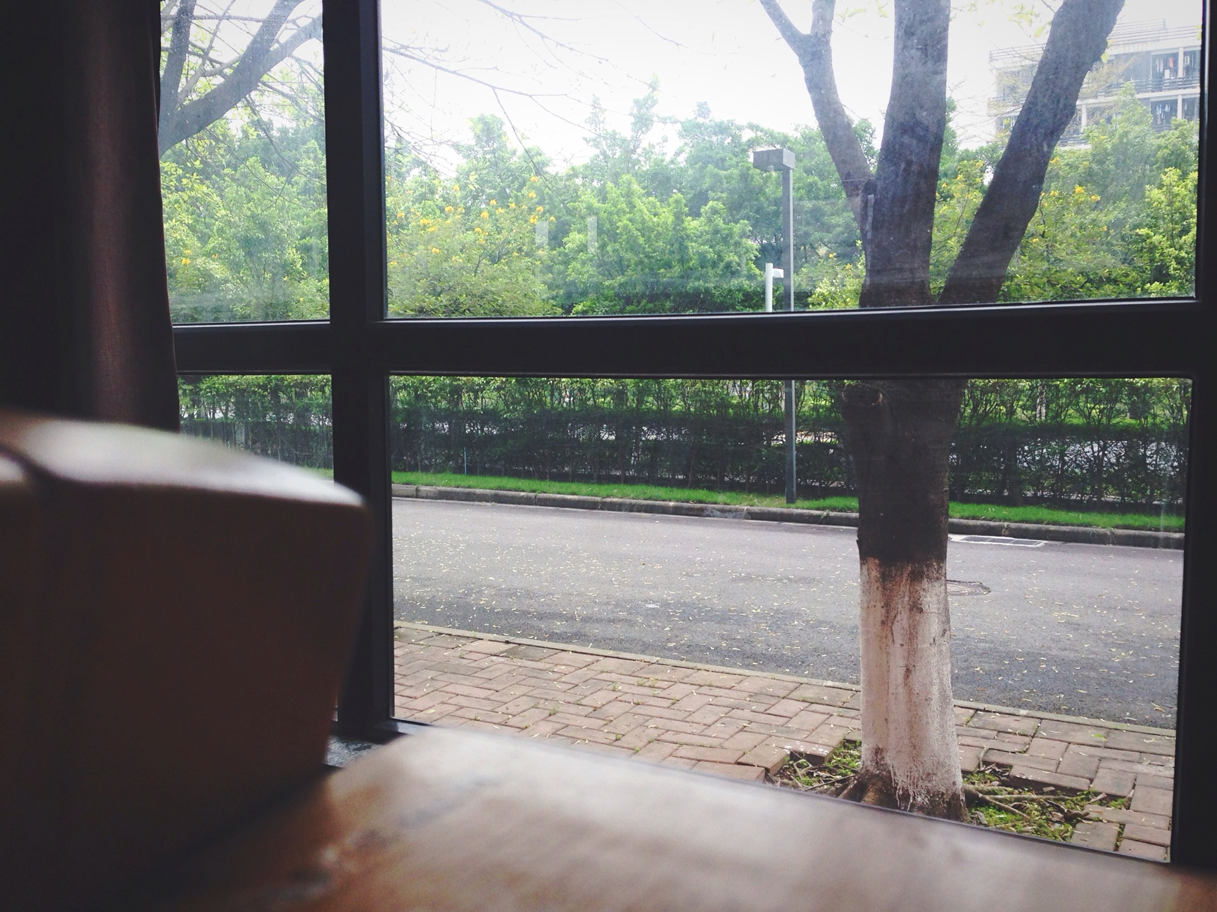 tree, window, indoors, transparent, railing, glass - material, sunlight, growth, day, shadow, no people, empty, nature, fence, tranquility, tree trunk, absence, looking through window, built structure