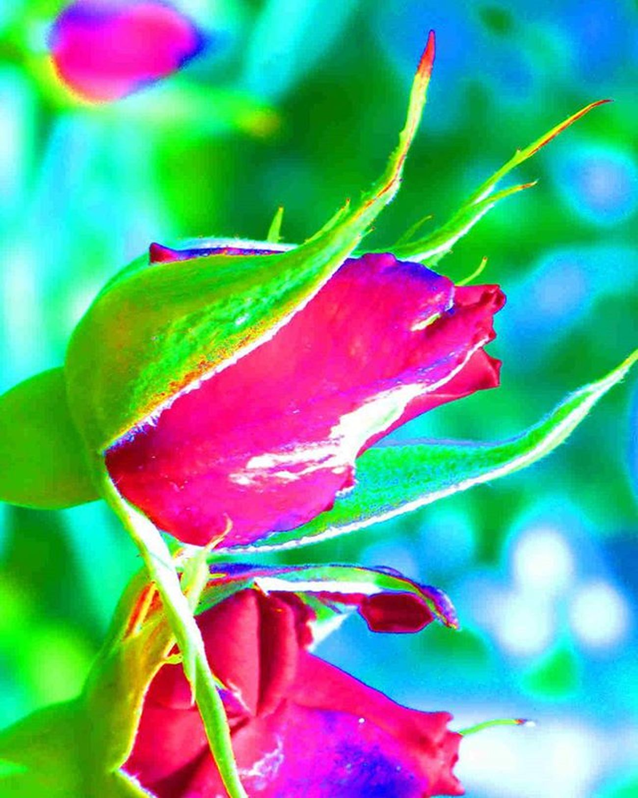 Roses blooming 😀 1) Macro_brilliance 2) Dof_brilliance 3) Ig_affair_weekly 4) Small_world_upclose 5) Ig_affair_macro 6) Macrongawi 7) Sn_may2 8) Mta_macro 9) Af_macro 0) Macroclique 1) Kings_hubs 2) Pocket_family 3) Igglobalclubmacro 4) My_daily_macro 5) Fotofanatics_alltags_ 6) Total_macro 7) Flowersandmacro 8) Macroparadise 9) Wms_macro 0) Photoflair_macro 1) Bpa_macro 2) Macroaddictsanonymous 3) Jabrmacro 4) Tv_closeup 5) 9vaga_flowersart9 6) macroworld_tr 7) ptk_macro 8) 9vaga_macro9 9) ig_closeups 0) ponyfony_flowers