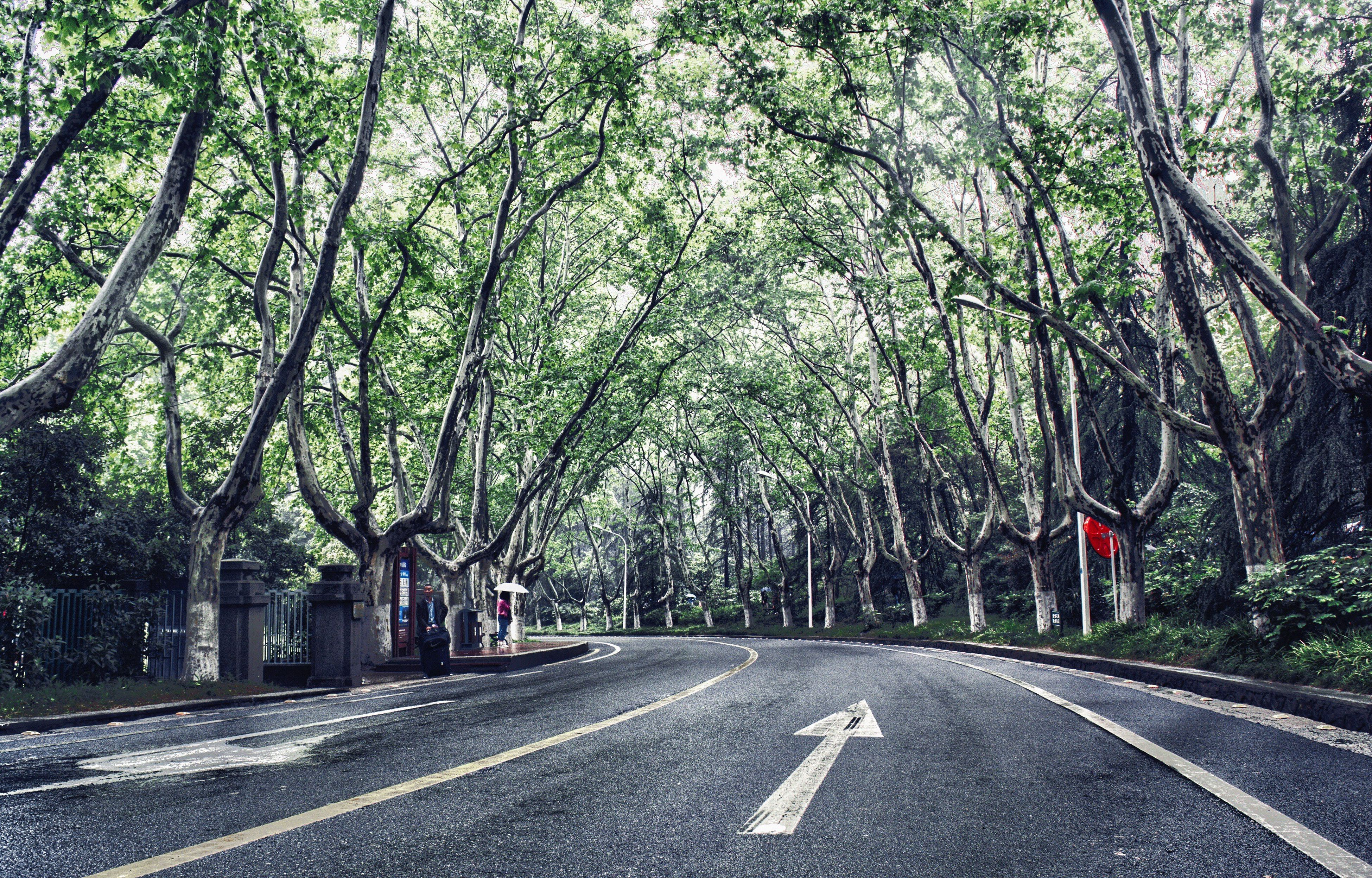 the way forward, tree, transportation, road, road marking, diminishing perspective, vanishing point, street, empty road, asphalt, treelined, road sign, empty, double yellow line, growth, country road, day, long, nature, outdoors