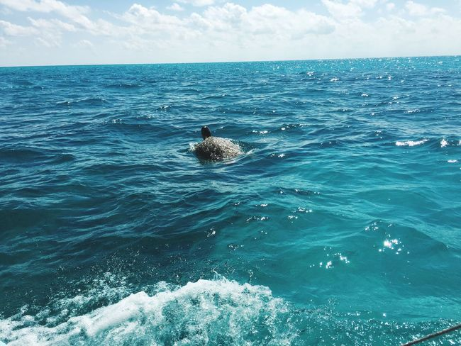 Animal favorite 🤗🐢 Wild] Turtle Lovetravelling Mexico Wildlife Sea Animal Themes Beauty In Nature Nature Photography Water Mexico Y Su Naturaleza Mylove