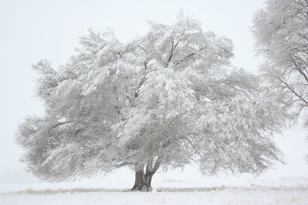 Winter in Wyoming Beauty In Nature Blackandwhite Cold Landscape Nature No People Non-urban Scene Outdoors Scenics Snow Spring Storm Tranquil Scene Tranquility Tree Weather Winter Winter Landscape Winter Wonderland Wyoming Winter