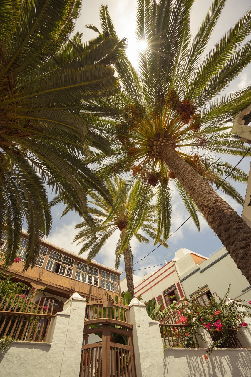 palm tree, tree, low angle view, architecture, built structure, building exterior, growth, no people, day, outdoors, nature, sky