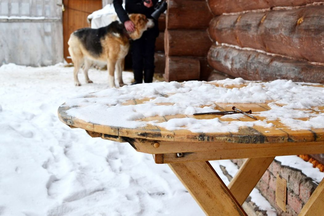 Cold Temperature Day Outdoors Rusty Nails Snow Table Winter Wood - Material Watchdog Farm Life Log Cabin Building Exterior Rural