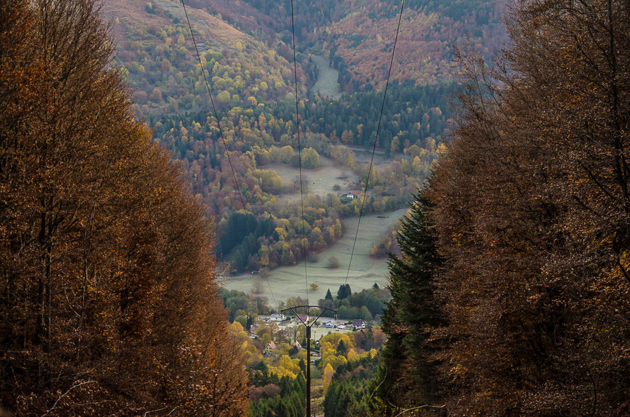 Tree Nature View From The Top Vosges France 🇫🇷 Krajobraz Gory Photographyeveryday Taking Pictures Rural Scene Autumn🍁🍁🍁 Nikon D7000 Nature Mountain Vilage In The Mountains Eyemcollections Landscape Forest Alsace France Naturebeauty Silhouette Photography