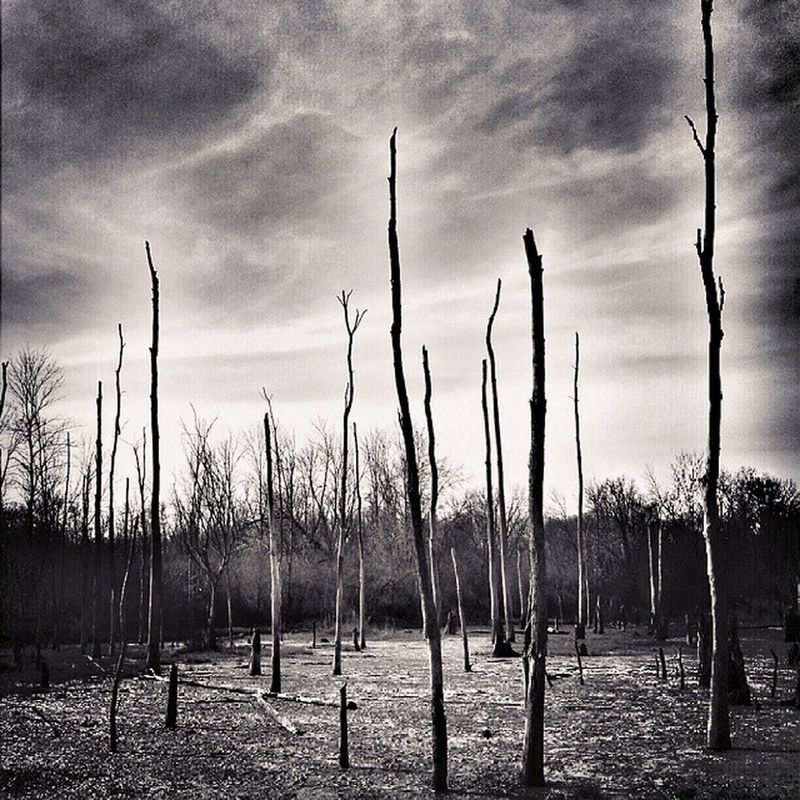 Dead Lands Swamp Dead Trees