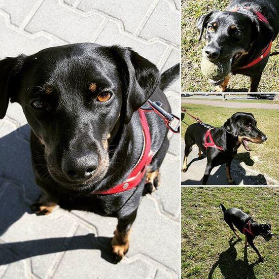 New photos Maja Dog Dogsofinstagram Dog Dogmodel Pies Majadog Dogmodel Doglifestyle Dogstyle Dogsofinstagram Doginstagram Insdog Warszawa  Lovedog