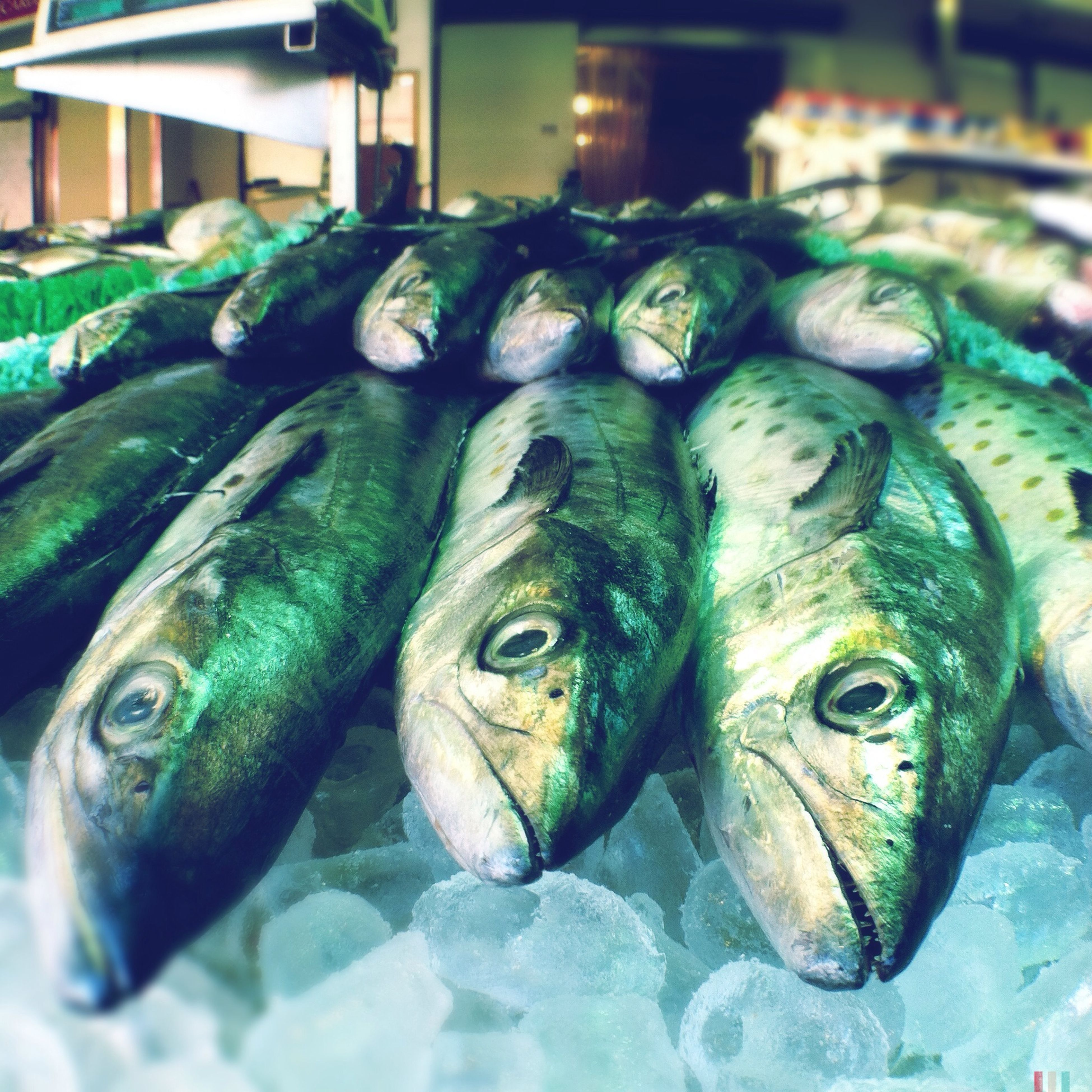 for sale, retail, fish, market stall, seafood, market, food, food and drink, large group of objects, sale, indoors, abundance, freshness, choice, variation, close-up, display, healthy eating, dead animal, fish market