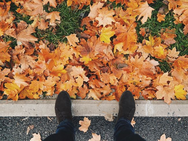Golden leaves... Taking Photos Vscocam Hello World Made In Romania Enjoying Life Relaxing Eye4photography  Nature Nature_collection Nature Photography Autumn Autumn Colors Autumn Leaves EyeEm EyeEm Best Shots Having Fun Travel Photography Outdoors Traveling Feet Feetselfie Travel Hanging Out My Favorite Photo