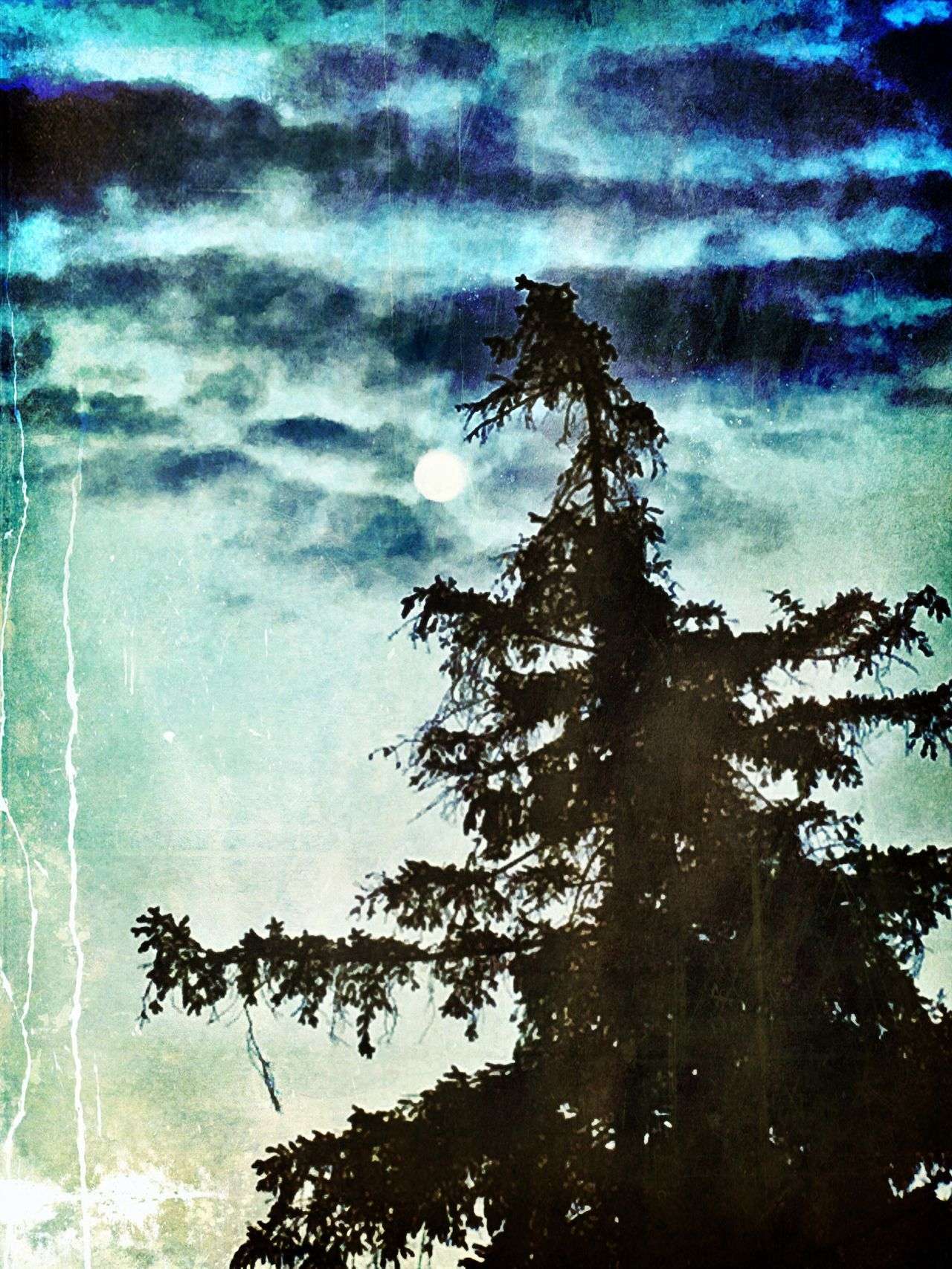 Fullmoon Burlingtonontario Things I See Lovelife Cloudporn Silouette Silouette And Shadows Trees And Sky Moonlight Whereilive Burlintonontario Lovelovelove