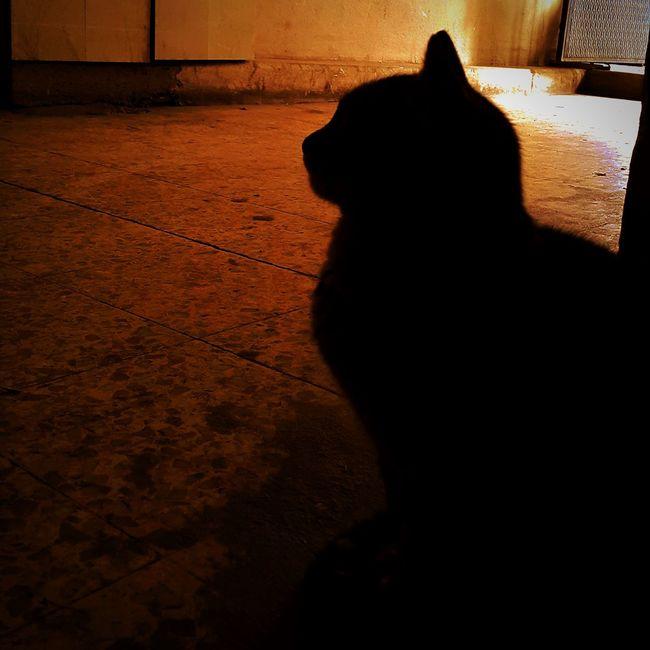 Seyhan Adana Anıyakala Sizinkareleriniz Benimkadrajım Animal First Eyeem Photo