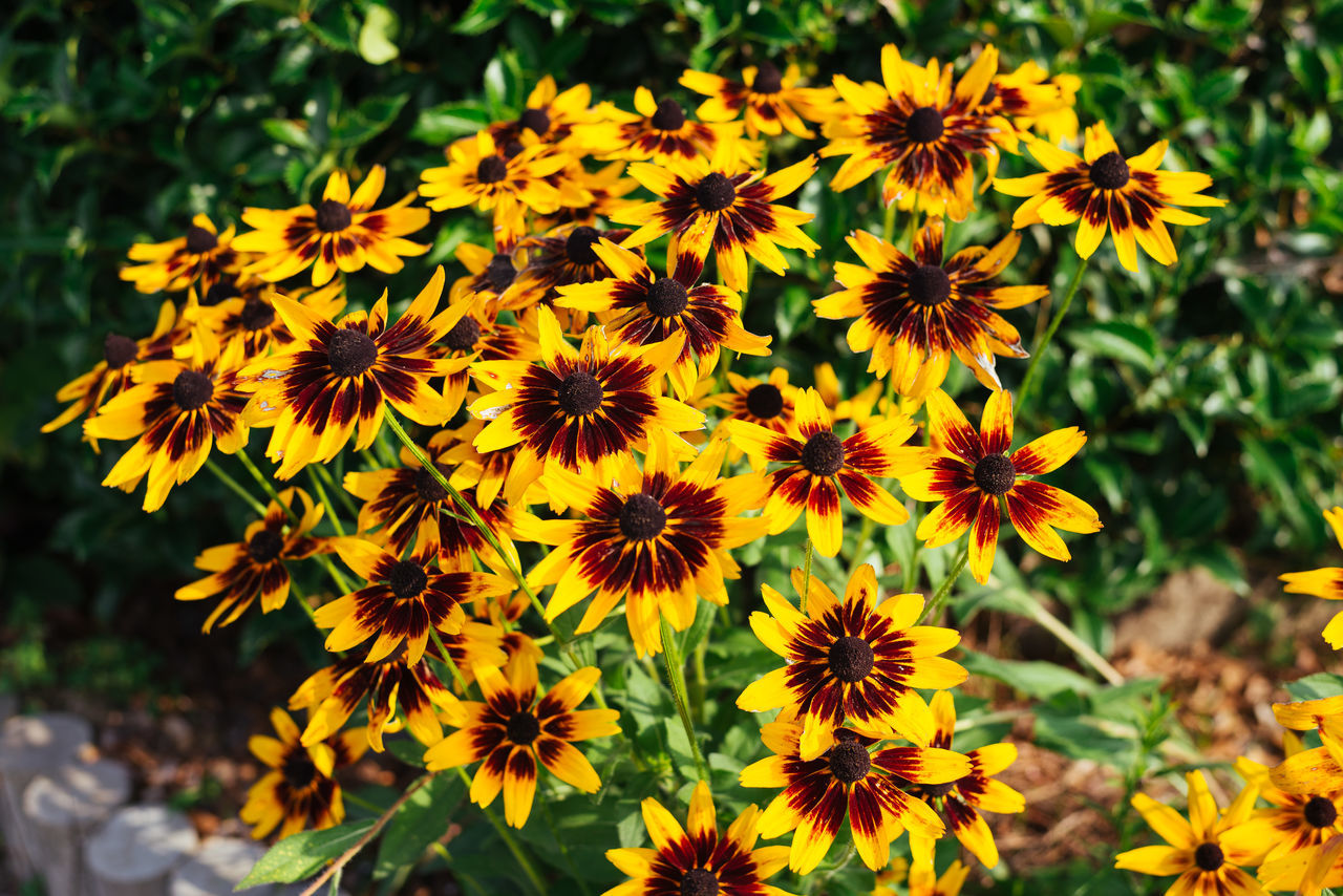 I don't usually post flowers but gotta say these ones were stunning. Beauty In Nature Black-eyed Susan Blooming Close-up Day Flower Flower Head Fragility Freshness Growth Nature No People Osteospermum Outdoors Petal Plant