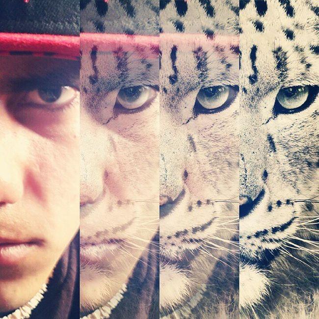 Swag Animal Time Wild Internal Handsome