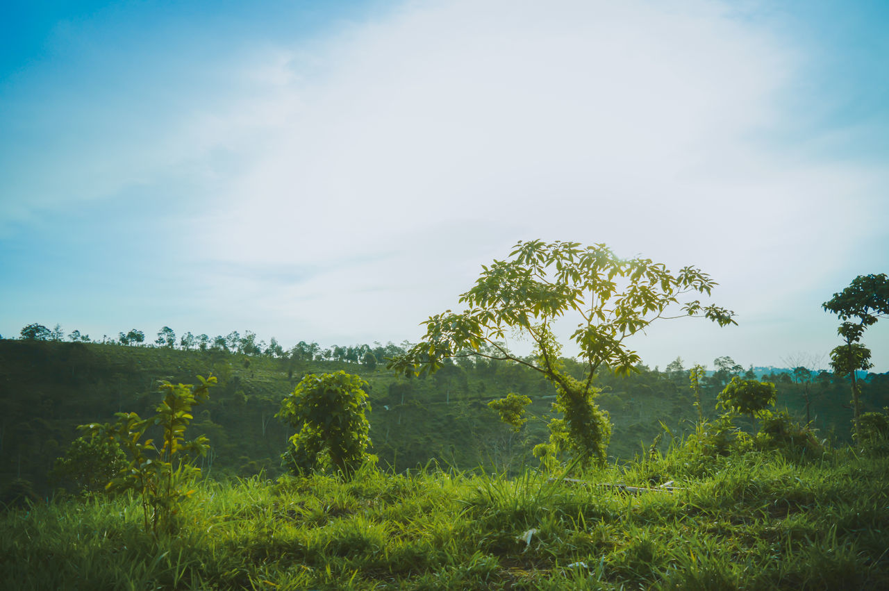 Tree Nature Sky Beauty In Nature Green Color Outdoors Day No People Cloud - Sky Grass Rural Scene Growth Tranquility Landscape Scenics Freshness The Great Outdoors - 2017 EyeEm Awards First Eyeem Photo Outdoor Travel Vacations