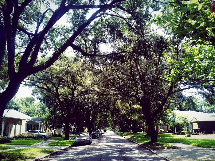 Shady Lane Day Suburban Landscape Tree covered Street Home Is Where The Art Is The Magic Mission Battle Of The Cities