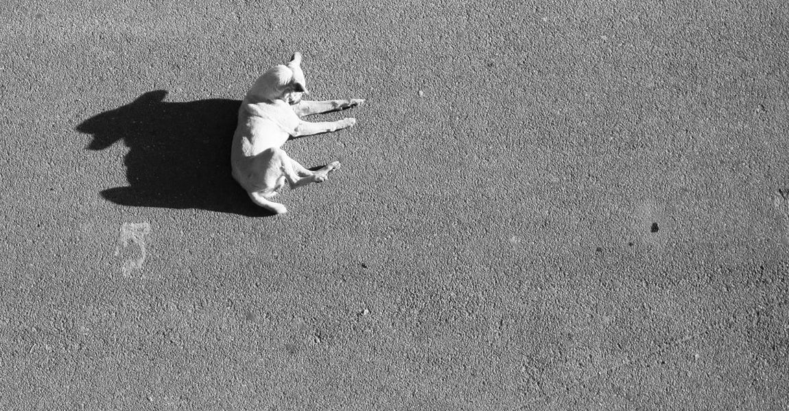 Chilling in the middle of the road 🐕 ☀ Sunbathing High Angle View Blackandwhite Monochrome From Above  Relaxation Ritual The Minimals Shadowy Shadowy Figure Dog Doggy MnMl Mnmlsm Minimalism Minimal Minimalistic Minimalmood Minimalist Minimalobsession Mobilephotography Shootermag AMPt_community Vscocam