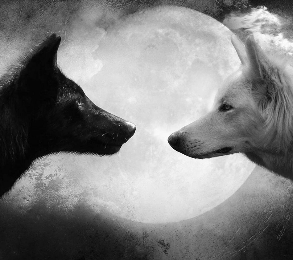 WOlves In The Magic Moonlight Midnightmemories Visionary Animal Photography Blackandwhite Lovely Day