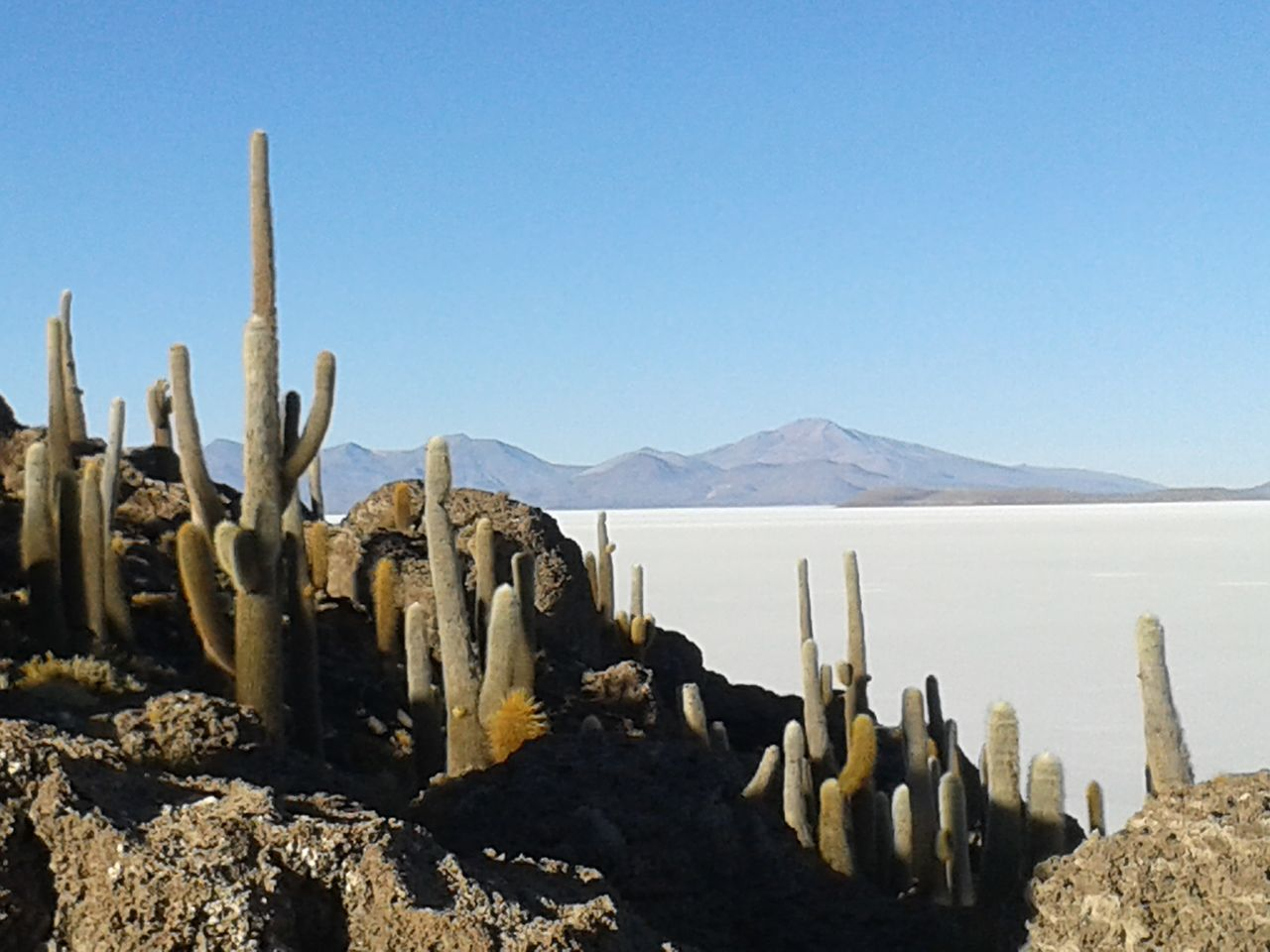 Arid Climate Beauty In Nature Blue Cactus Clear Sky Day Landscape Mountain Nature No People Non-urban Scene Outdoors Rock - Object Salt Flat Scenics Sky Tranquil Scene Tranquility Wilderness Area