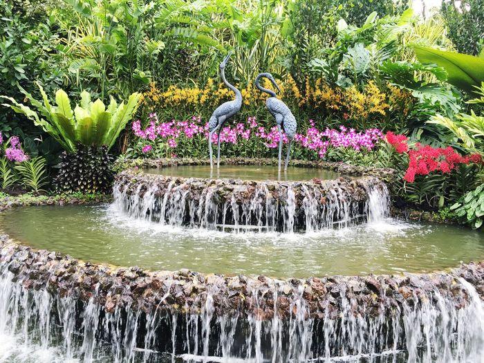 Orchid Garden@Botanical Gardens Singapore First Eyeem Photo