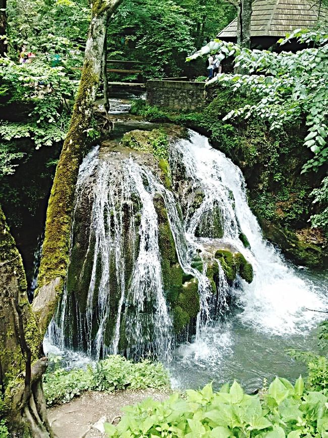 Forest Nature Waterfall Green Color Outdoors Grass Bigar Waterfall Romania
