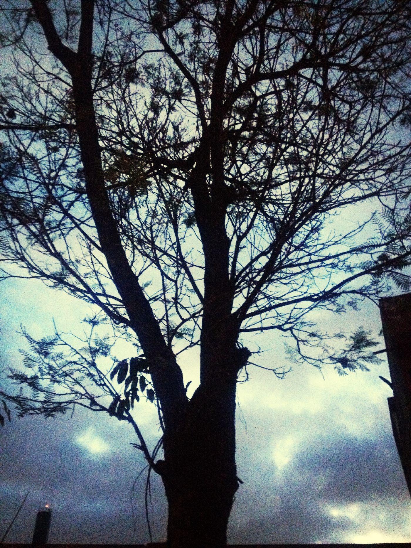 Nature Back To Work  I Like Taken Pics Trees
