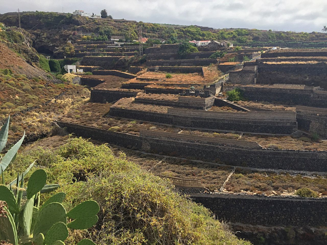 agriculture, field, growth, rural scene, nature, outdoors, no people, day, terraced field