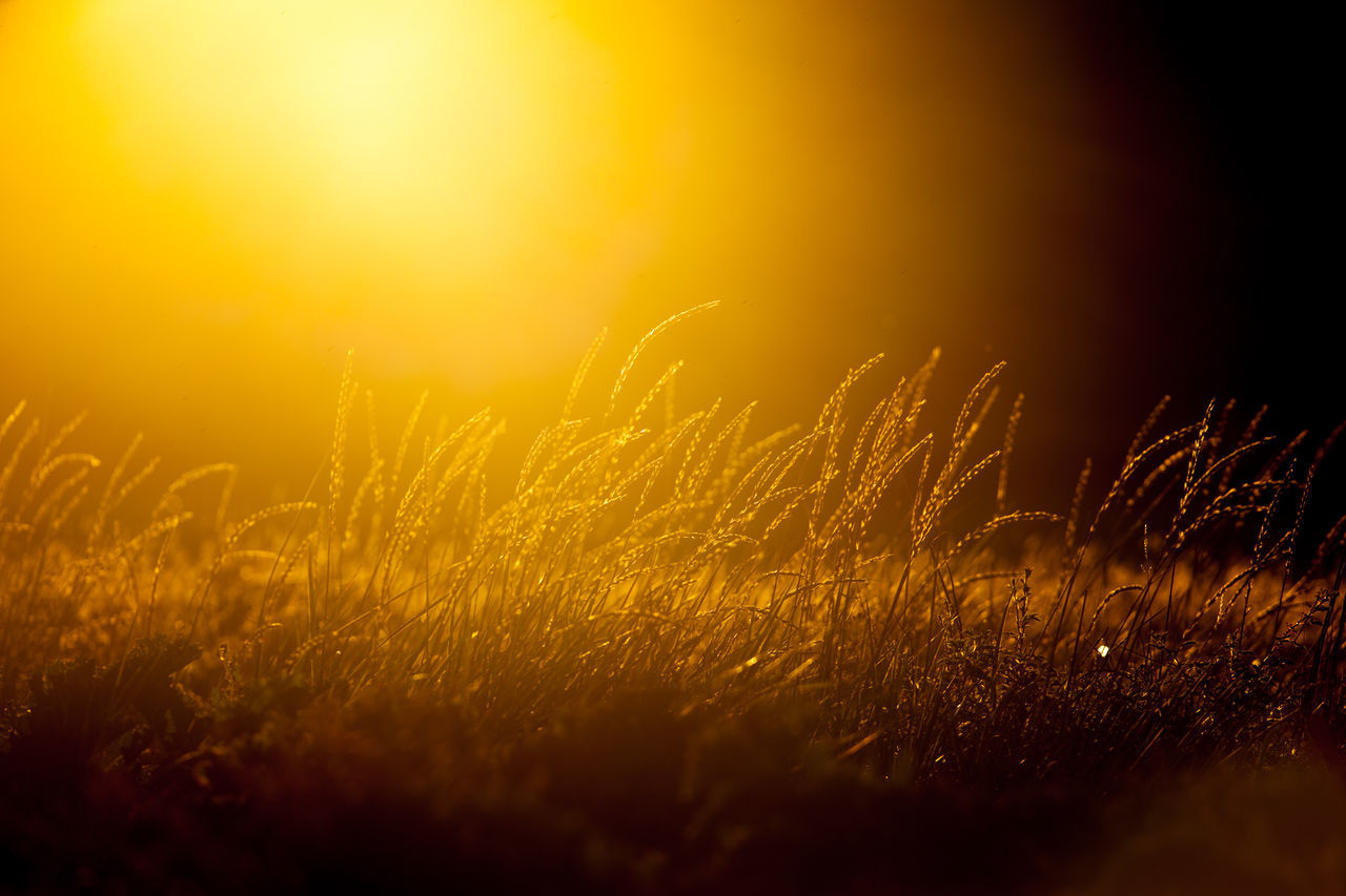 Golden moment 300mm 43 Golden Moments Bokeh Field Focus On Foreground Golden Hour Grass Grassy Landscape Nature Nevlunghavn Norway Straws Sunset Tranquil Scene Vestfold Vestfold, Norway Fine Art Photography Showcase July Colour Of Life Color Palette Live For The Story