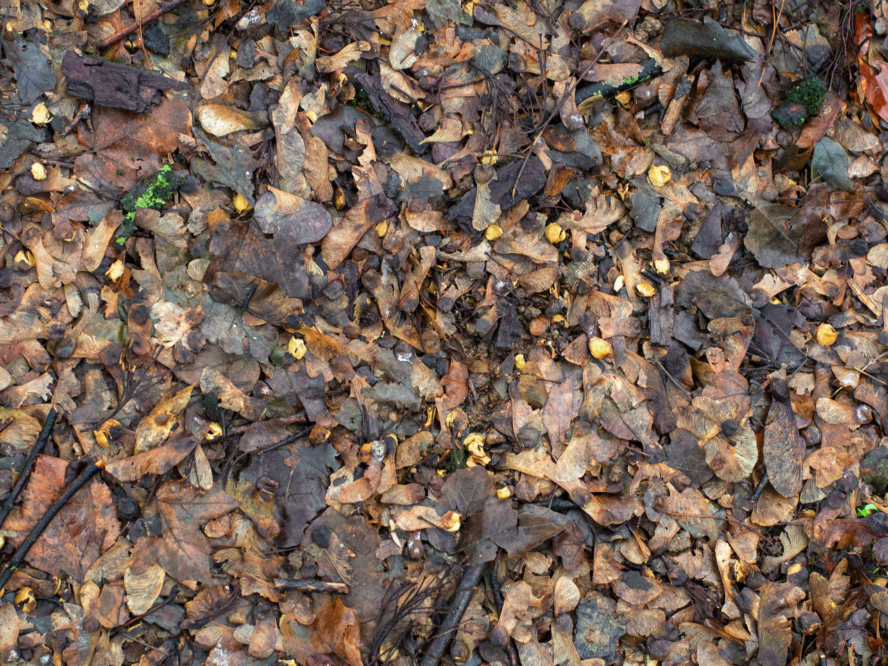 autumn, leaf, change, dry, leaves, full frame, nature, abundance, maple leaf, backgrounds, day, fallen, outdoors, large group of objects, no people, high angle view, maple, fragility, directly above, beauty in nature, close-up