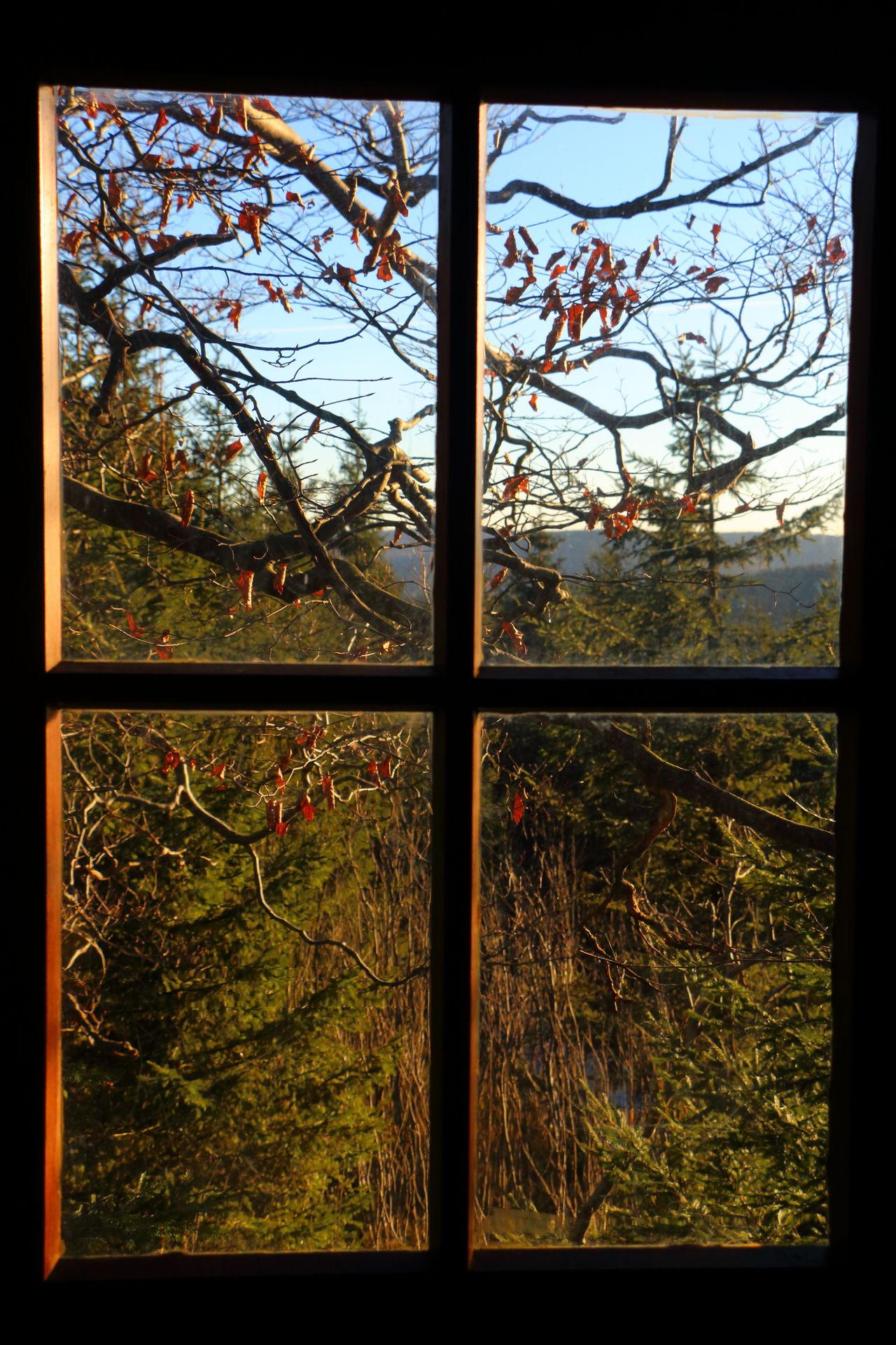 Sonorutica Ausblick Baum Blick Aus Dem Fenster Dark Dunkel Fenster Himmel Licht Light Natur Nature Sky Tree View View Out My Window Window