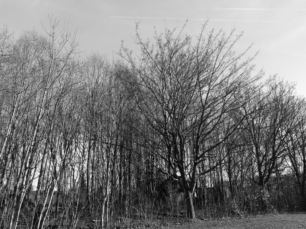 Nudetress Sky No People Nature Day Spring2017 Sønderborg HuaweiP9 Monochrome Photography Clouds Denmark