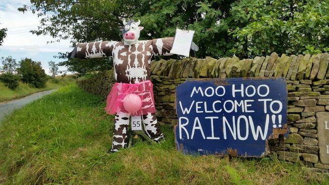 Rainow Cow Countr