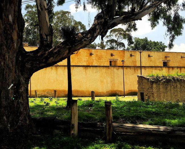 The Great Outdoors - 2015 EyeEm Awards The Traveler - 2015 EyeEm Awards Exhacienda De Chautla Landscape Hacienda Trees Tree Nature Nature_collection Check This Out