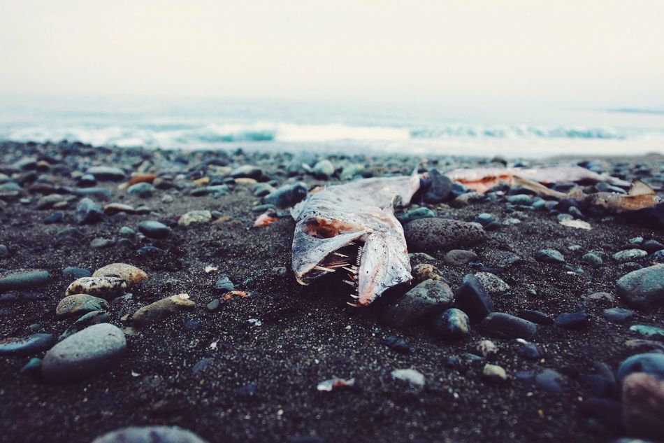 Beautiful stock photos of japan, Animal Themes, Beach, Day, Dead Animal