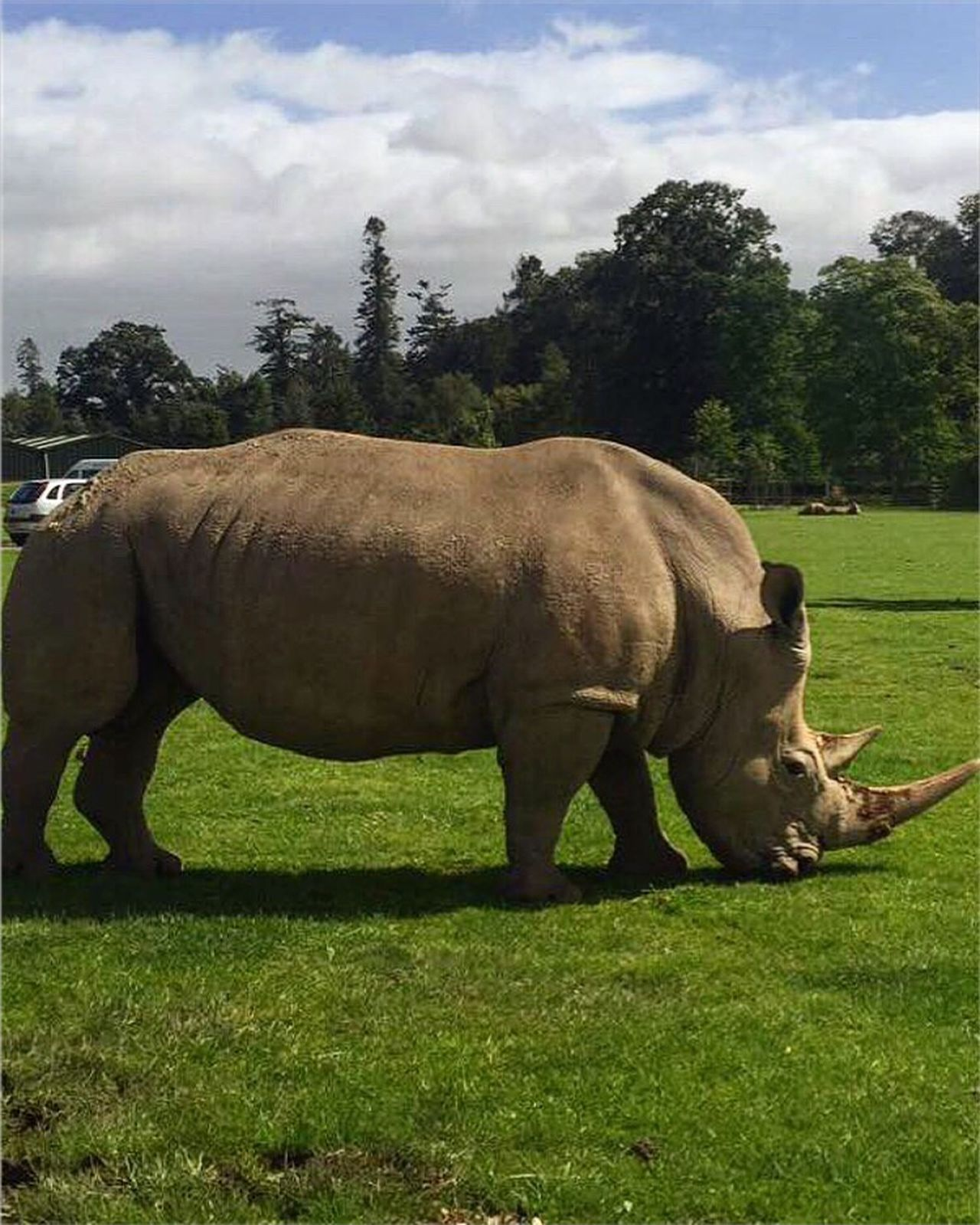 Blair Drummond WhiteRhino Safaripark
