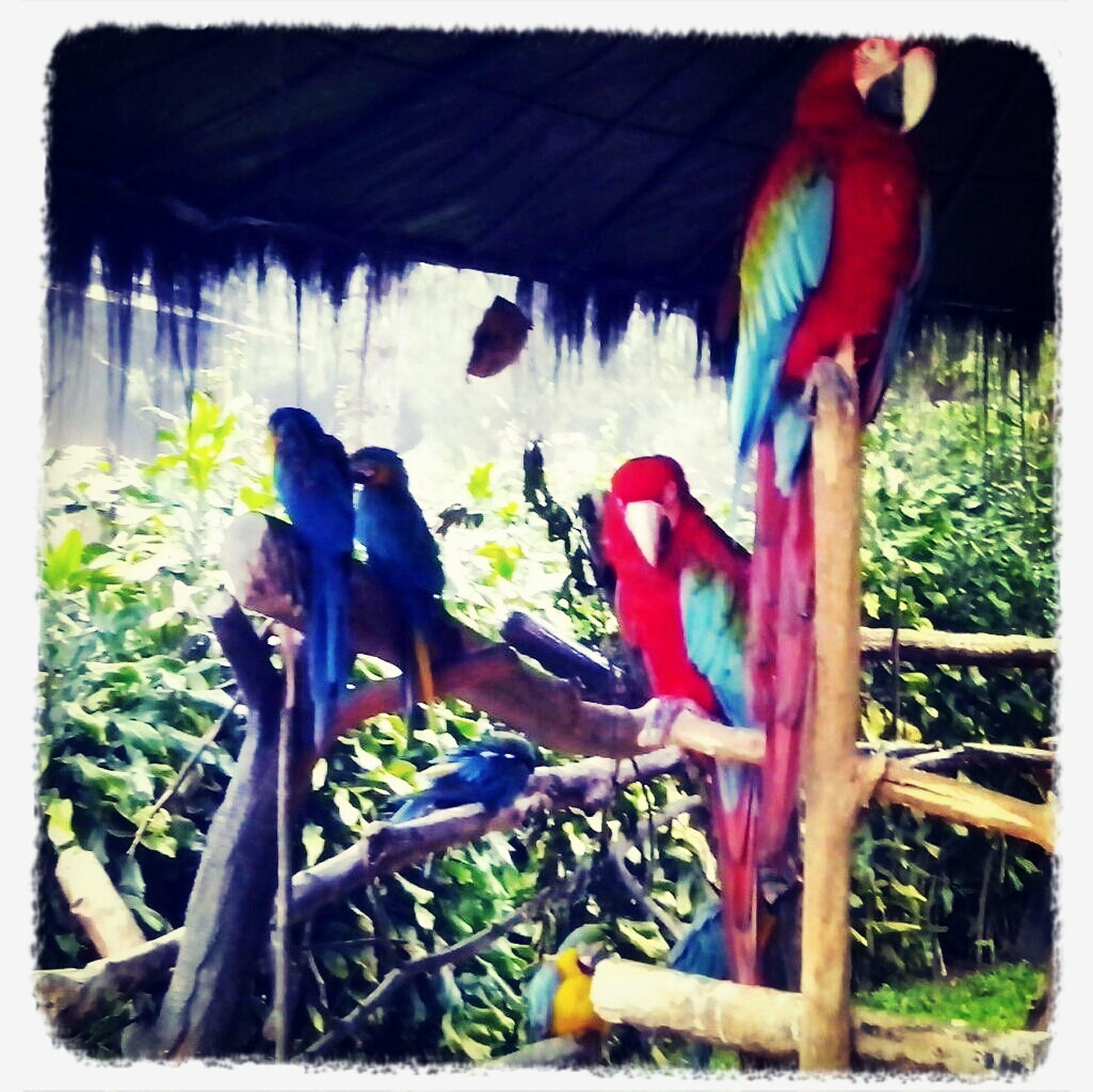EyeEm Birds Taking Photos birds