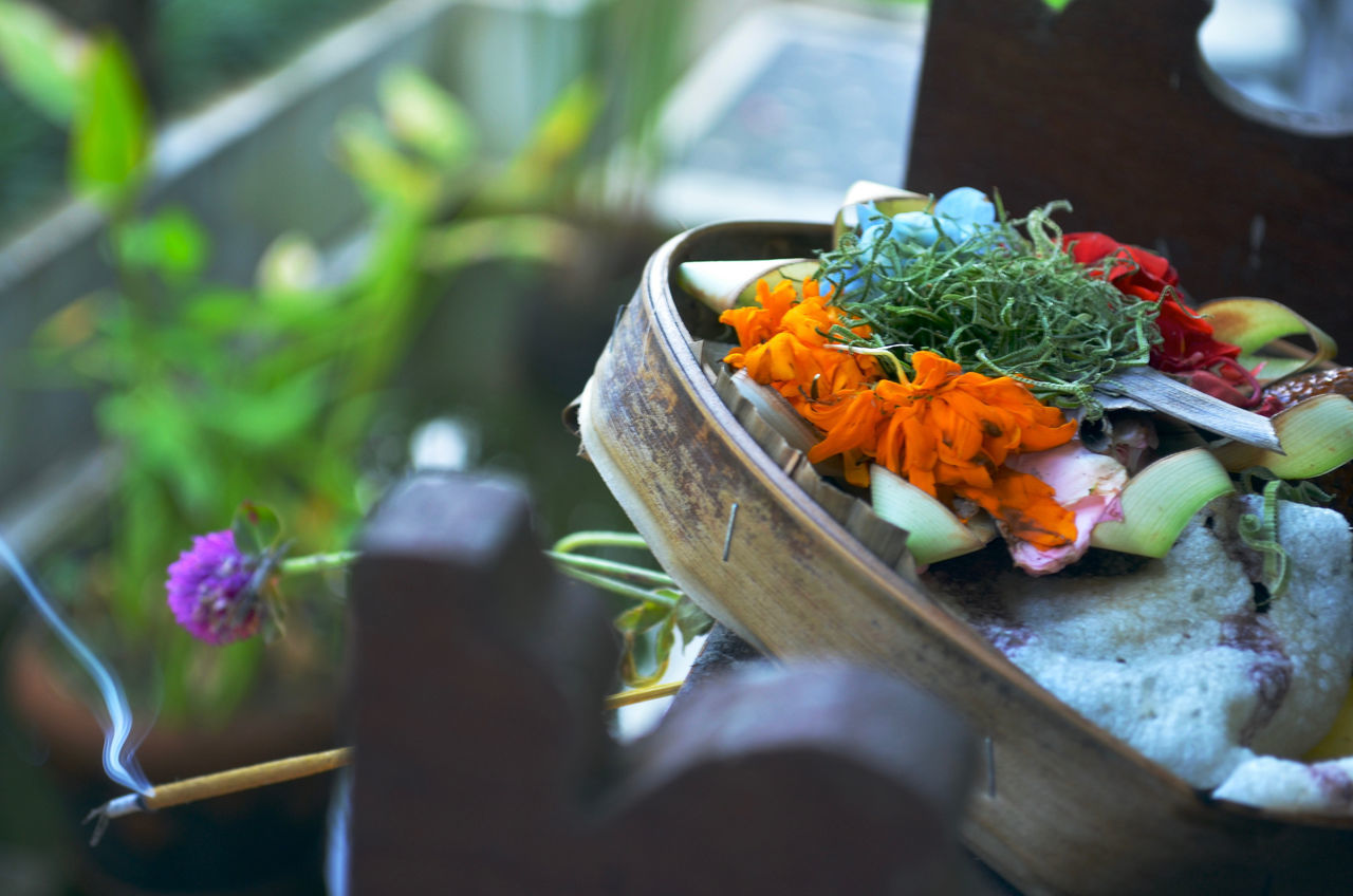 Beautiful stock photos of bali, Beauty In Nature, Close-Up, Day, Flower