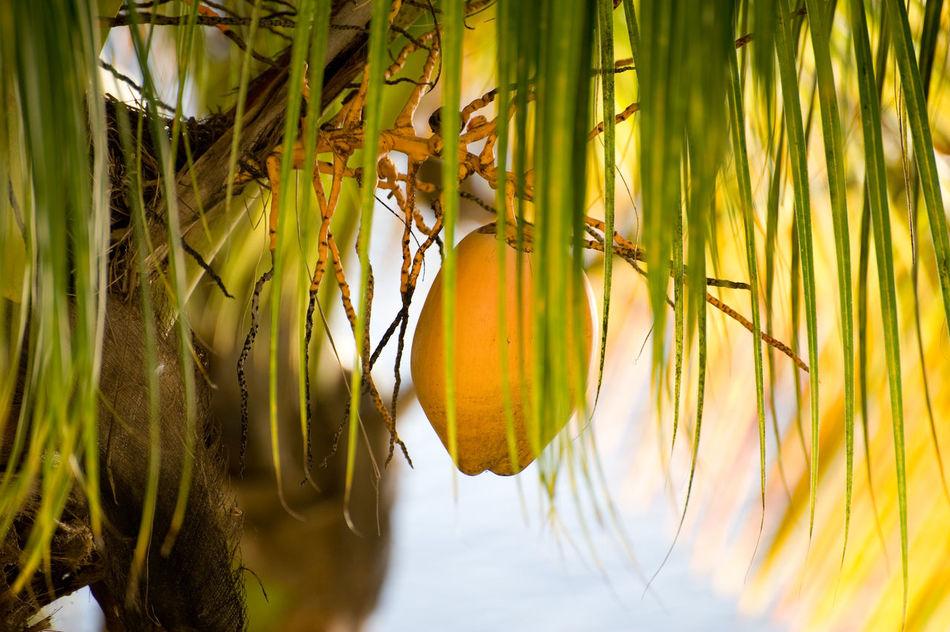 Beautiful stock photos of fruit, Crop, Delicious, Foliage, Food