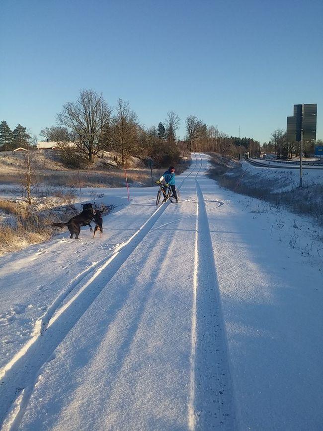 Snow ❄ Walking Snow Day Lovemydogs
