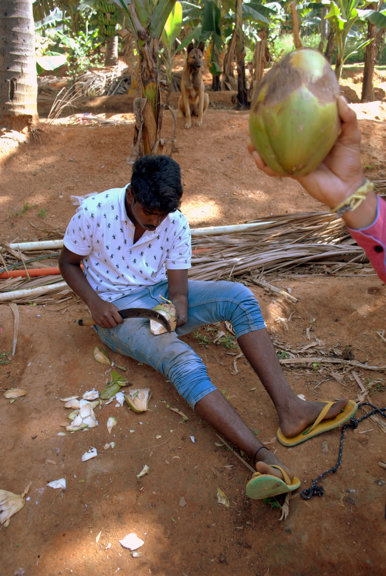 People Life Adult Coconut Coconut Chipping, Daily Life Day Dog Inspiration Inspiring View Knife, Nature One Hand Outdoors People People Photography People, Sand Sitting Two Persons