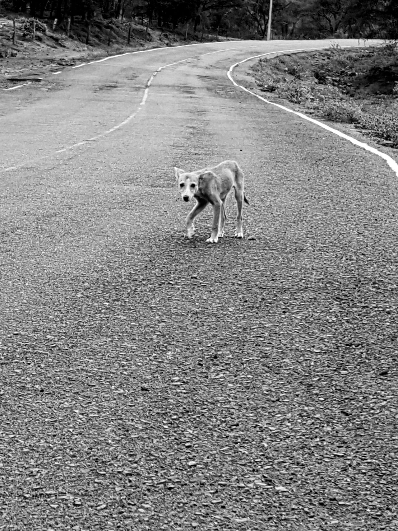 Animal Themes One Animal Domestic Animals Dog Pets Lonely Dog Lonely Road Lonely Objects Lonely