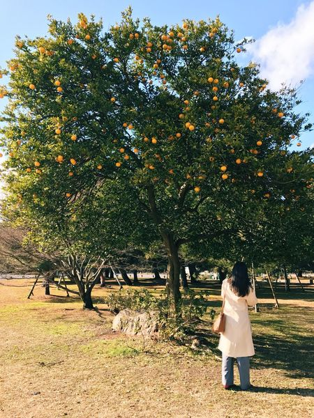 🌳💛👩🏻 Tree Fruit Nature Growth Outdoors Feeling Good Taking Photos Eye4photography  Peaceful View Trees And Sky Nature On Your Doorstep Blue Sky Beauty In Nature Sky And Clouds Goodvibes Bluesky Fruit Tree Happiness Good Day Citrus Fruit Sky_collection Nature_collection Sky Nature Photography Trees