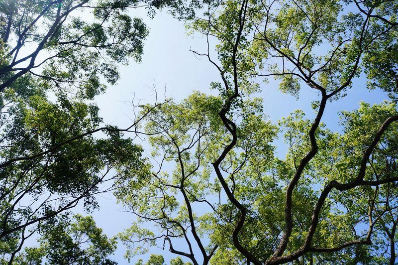 Sky in forestry First Eyeem Photo