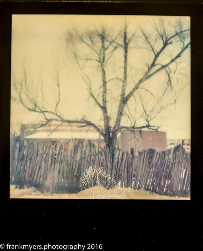New Mexico Impossible Project Bare Tree Desert Life Scenics