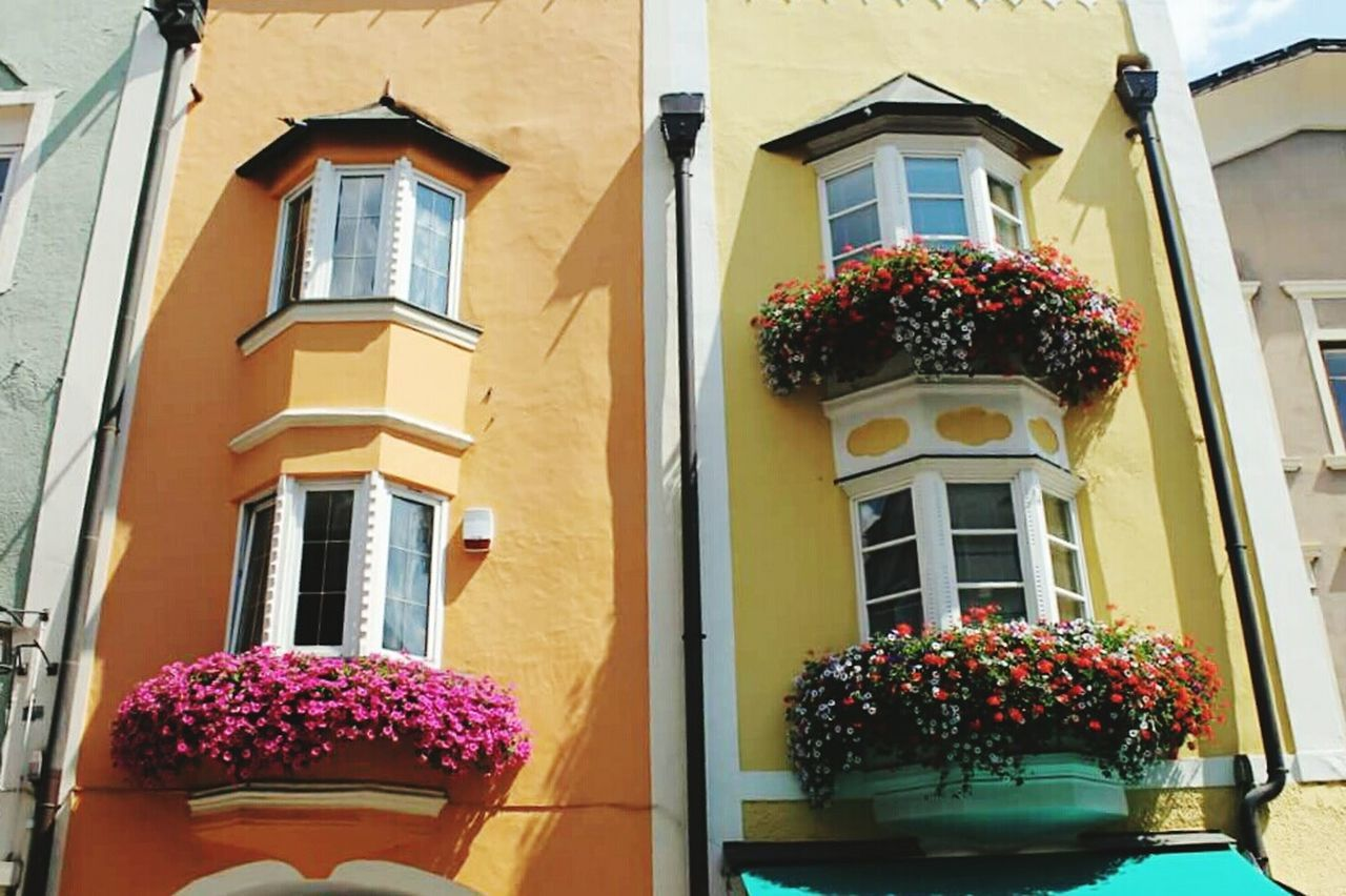 Building Exterior Flower Window Built Structure Outdoors Architecture Residential Building Low Angle View No People Nature Day
