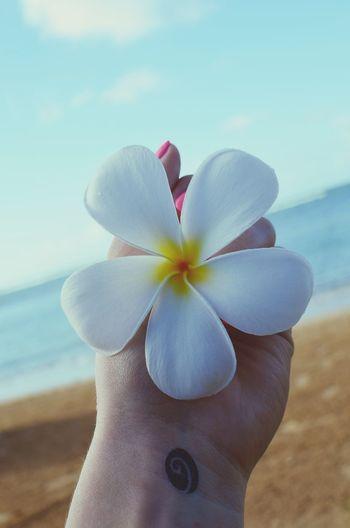 Hawaii 2014 That's Me Hawaii Kahala Flower See Sun Holiday Honolulu, Hawaii