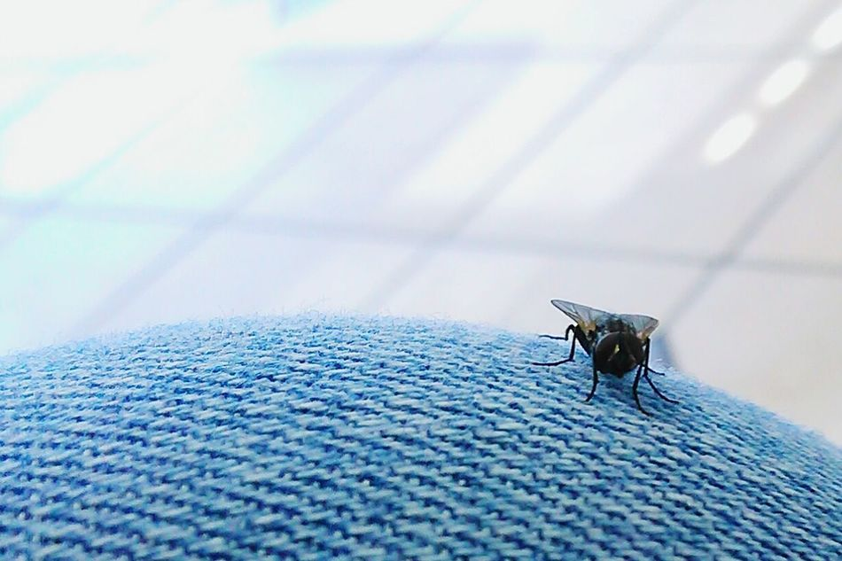 This little fly :), Hello Peoplee ❤❤ Flying High FlyGuy Flies Wow *-*