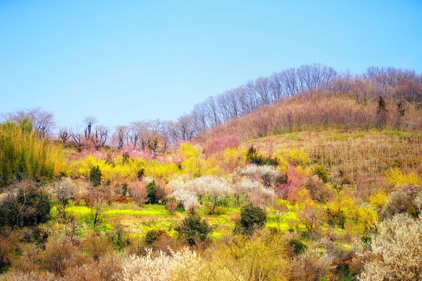 Capture The Moment Fantasy Nature Dreaming Scenics Spring Mountain Multi Colored Landscapes Beauty In Nature Clear Sky Outdoors Fine Art Still Life EyeEmNewHere The Secret Spaces Fragility EyeEm Diversity Tranquility Snapshots Of Life Full Frame Detail Sigma EyeEm Best Shots 17_04
