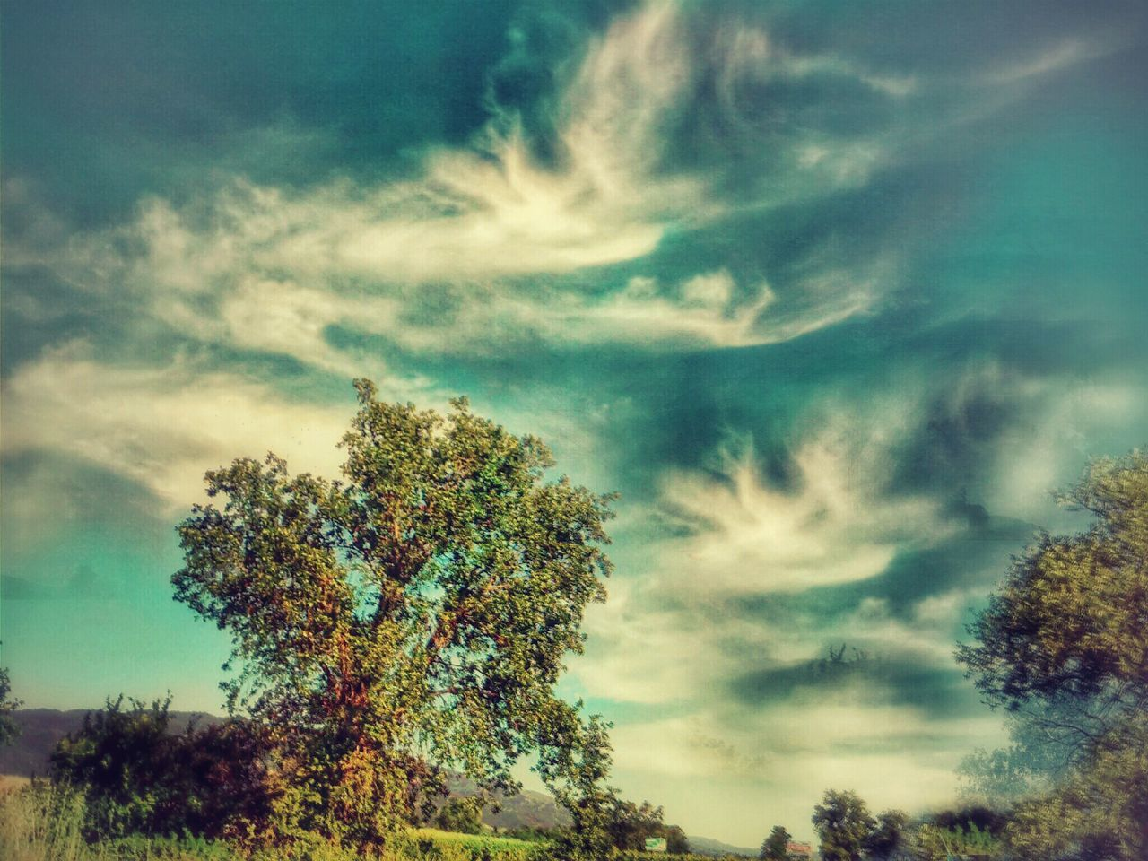 tree, sky, nature, beauty in nature, tranquility, cloud - sky, low angle view, scenics, no people, growth, tranquil scene, day, outdoors, idyllic, landscape