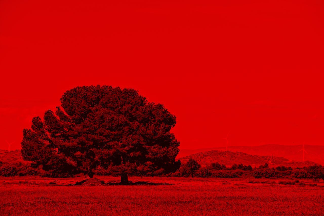 Horizon Over Land Silhouette Red Tree Landscape Nature Beauty In Nature No People Outdoors Day Sky Let's Do It Chic! EyeEm Best Shots Exceptional Photographs Respect For The Good Taste Sustainability Tranquil Scene Tranquility